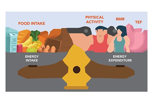 Active Health Energy Balance
